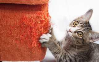 Что делать, если кот дерет диван